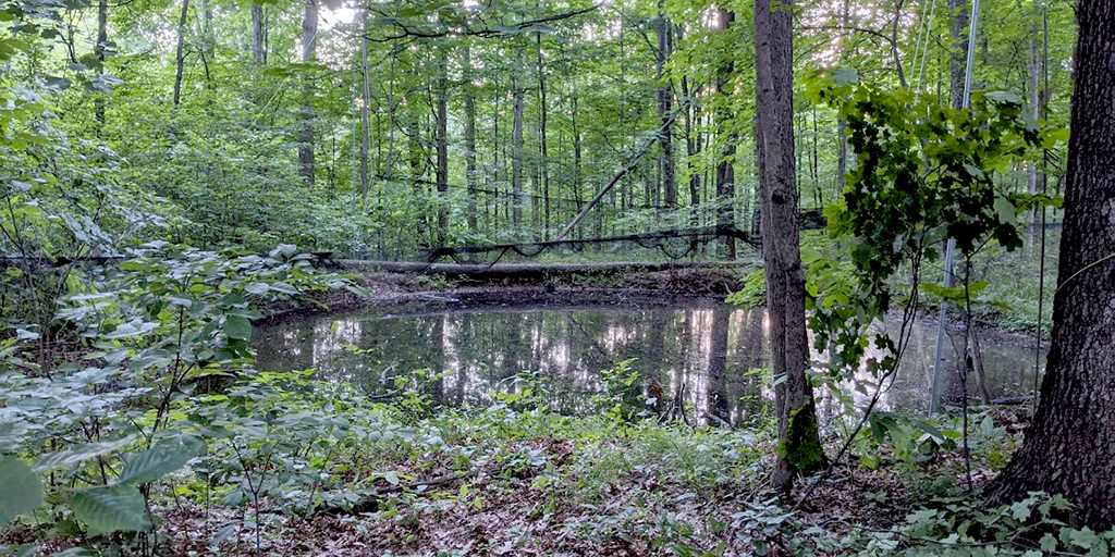 Photo of a tiny pond surrounded by forest, with fine netting strung around it.