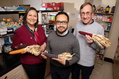 Scientists at the University of Illinois found that compounds in purple corn fight obesity, inflammation and insulin resistance in mouse cells. The team includes, from left, food science professor Elvira Gonzalez de Mejia, postdoctoral researcher Diego Luna-Vital and crop sciences professor John Juvik.