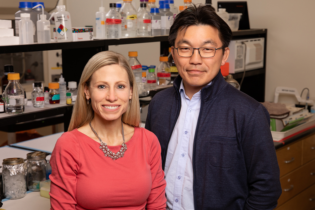 Marni Boppart, Hyun Joon Kong and their colleagues found that injections of pericytes can aid muscle regrowth in mice after disuse atrophy.