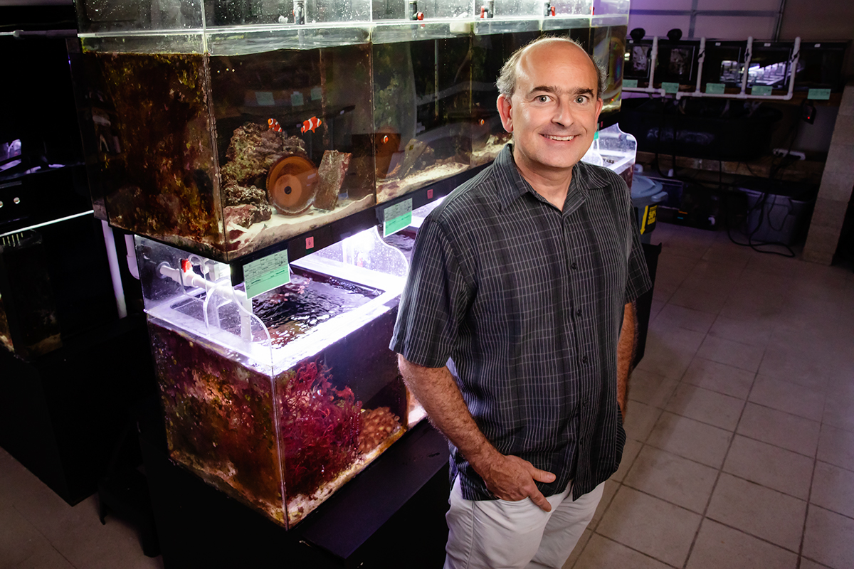 U. of I. psychology professor Justin Rhodes and his colleagues discovered that the male-to-female sex change in anemonefish occurs first in the brain.