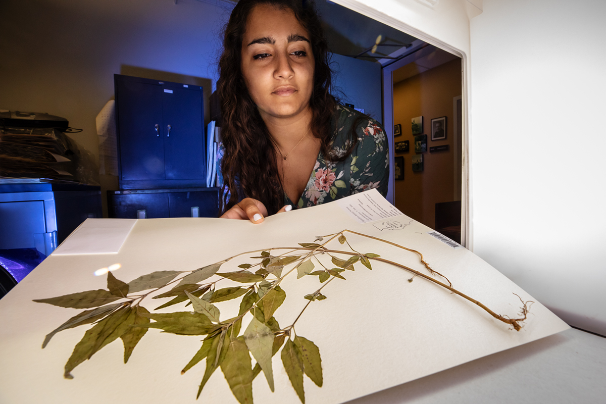 Serina Taluja scanned thousands of specimens belonging to the Illinois Natural History Survey Herbarium.