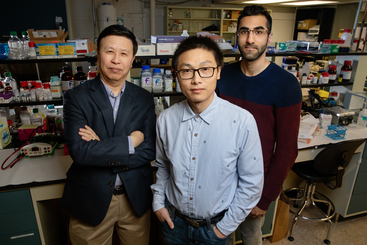Researchers, including, from left, Ning Wang, a professor of mechanical science and engineering; postdoctoral fellow Jian Sun; and doctoral student Erfan Mohagheghian discovered that mechanical forces on cells can boost gene expression in the nucleus.