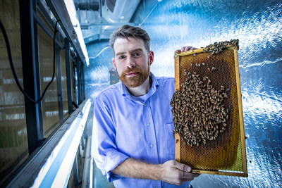Entomology professor Adam Dolezal and his colleagues found that infection with the Israeli acute paralysis virus increases the likelihood that infected bees are accepted by foreign colonies