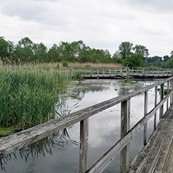 Photo of a wetland and boardwalk